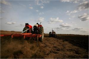Sudanese agribusiness